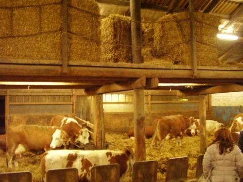 Slika 1. - Dio praktikuma srednje poljoprivredne škole Hatzendorf