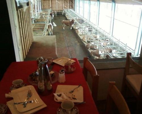 Slika 7. - Pogled s terase Kuhcaffe OPG Derler